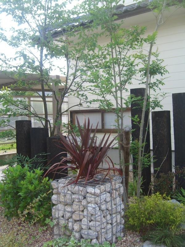 雑木が庭の雰囲気を演出してくれています7