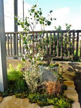 花壇と植物のさわやかな共演3