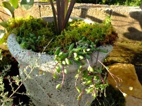 花壇と植物のさわやかな共演2