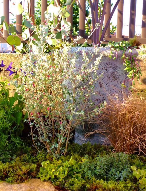 花壇と植物のさわやかな共演4